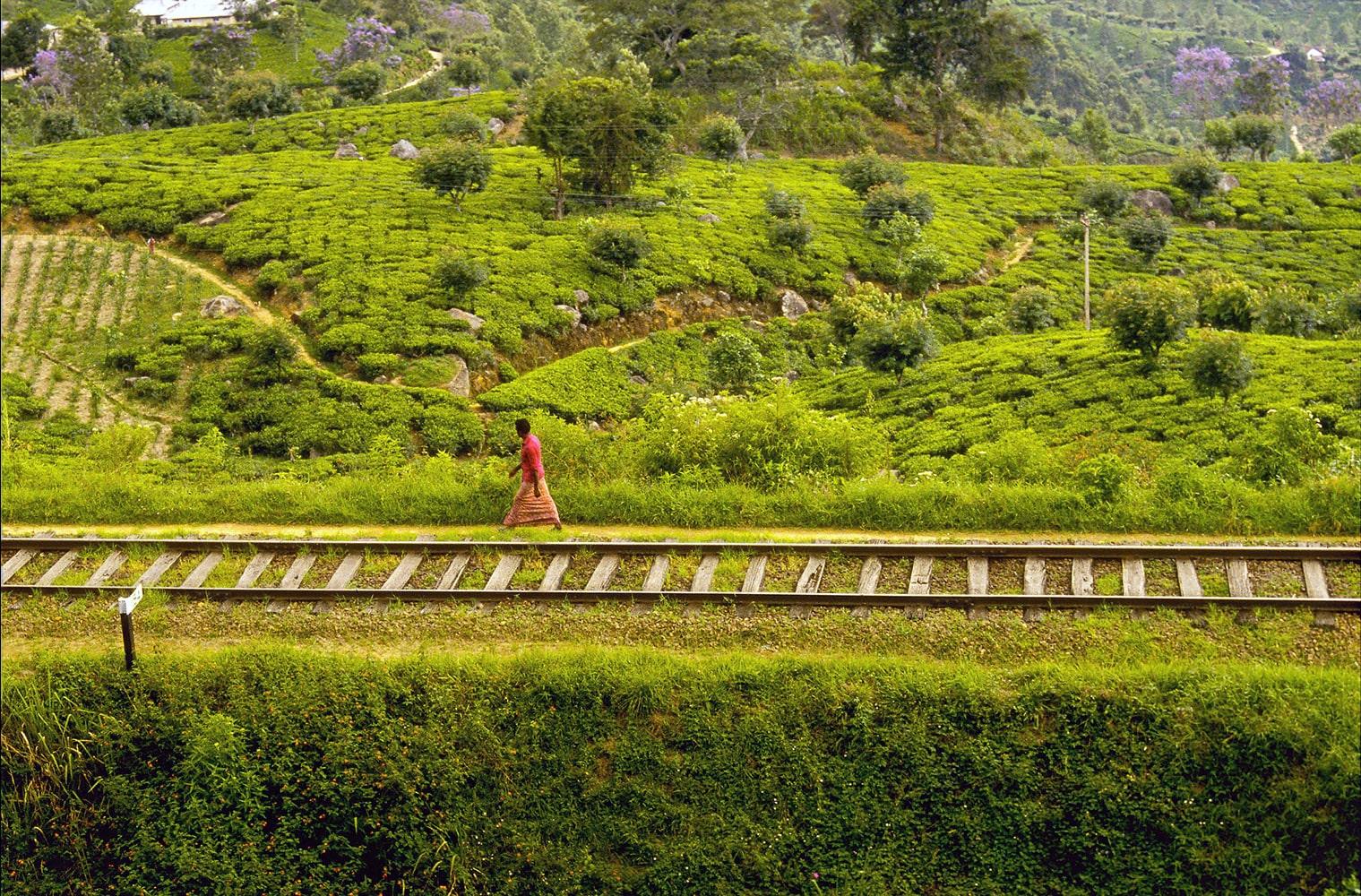 © Studio Niko : Plantations de thé au Sri Lanka